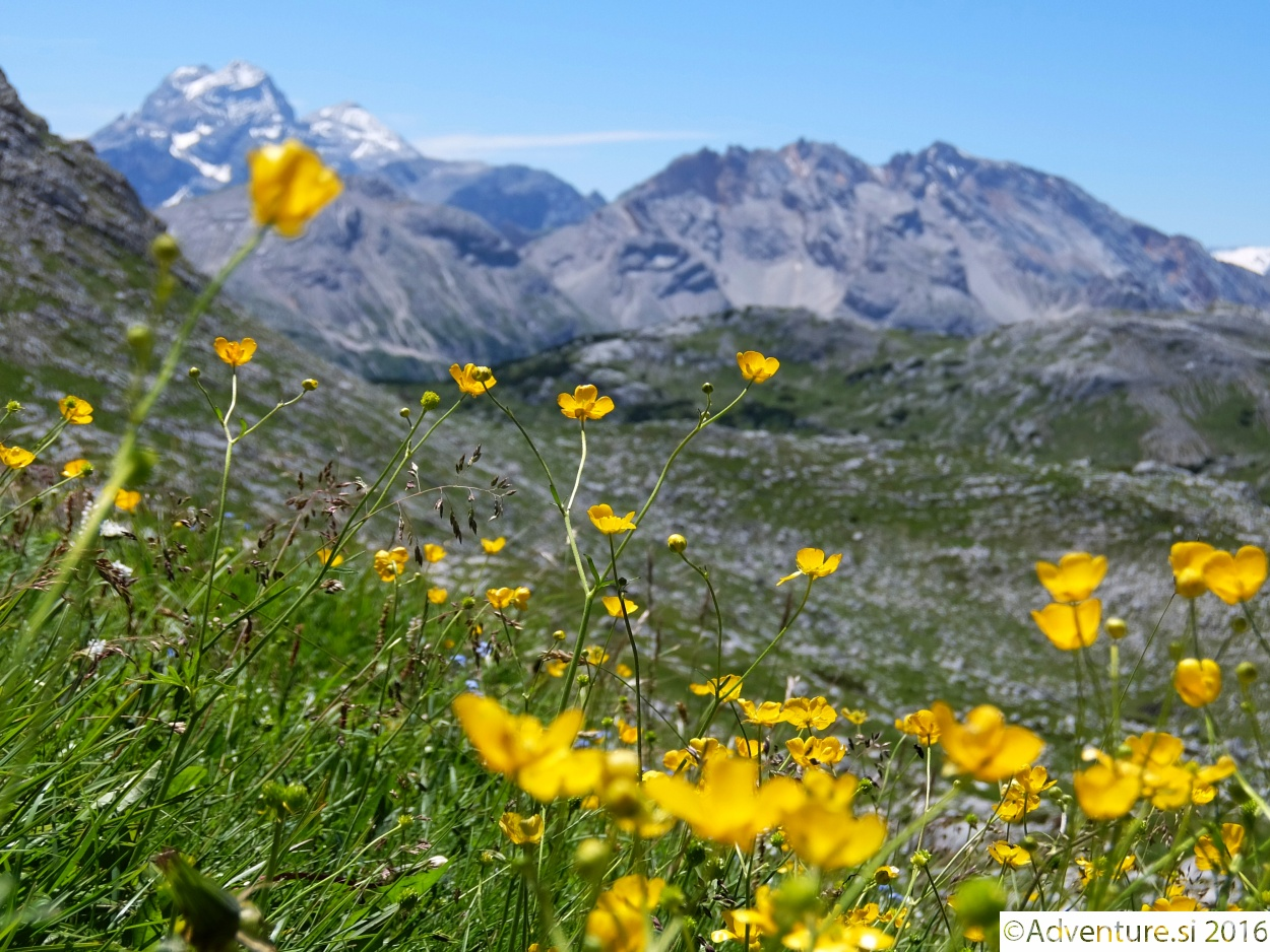 Cortina_2016_003